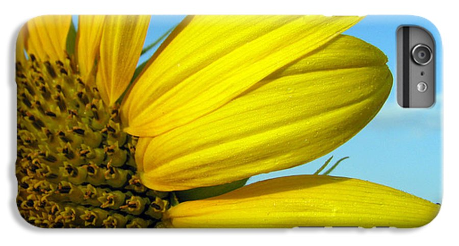 Sunflowers IPhone 6 Plus Case featuring the photograph Sunflower by Amanda Barcon