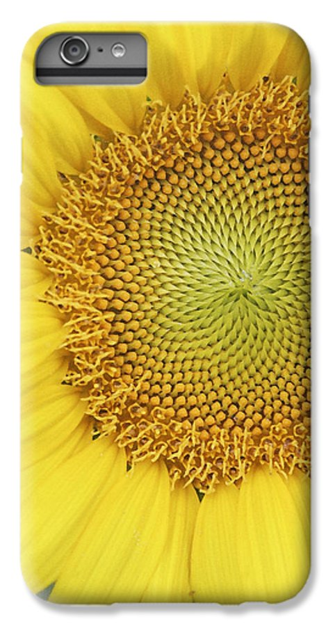 Sunflower IPhone 6 Plus Case featuring the photograph Sunflower by Margie Wildblood