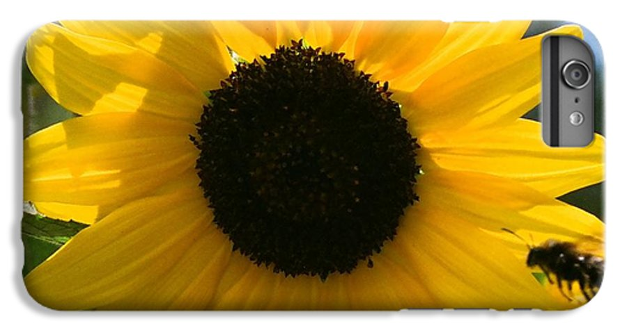 Flower IPhone 6 Plus Case featuring the photograph Sunflower With Bee by Dean Triolo