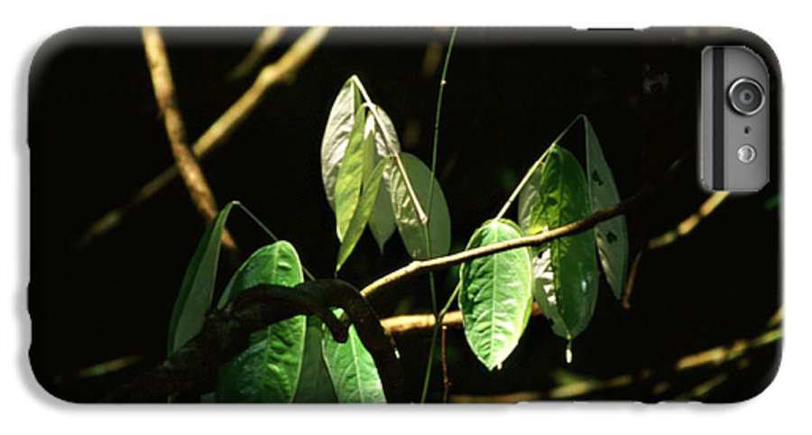 Leaves IPhone 6 Plus Case featuring the photograph Sunlit Leaves by Kathy McClure