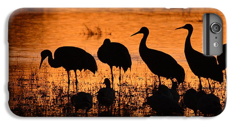 Crane IPhone 6 Plus Case featuring the photograph Sunset Reflections Of Cranes And Geese by Max Allen