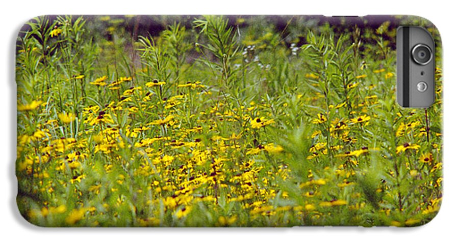 Nature IPhone 6 Plus Case featuring the photograph Susans In A Green Field by Randy Oberg