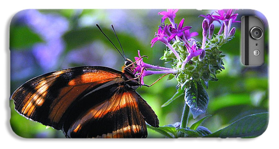 Butterfly IPhone 6 Plus Case featuring the photograph Sweet Nector by Louise Magno
