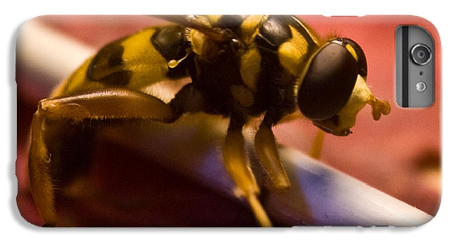 Insect IPhone 6 Plus Case featuring the photograph Syrphid Fly Poised by Douglas Barnett