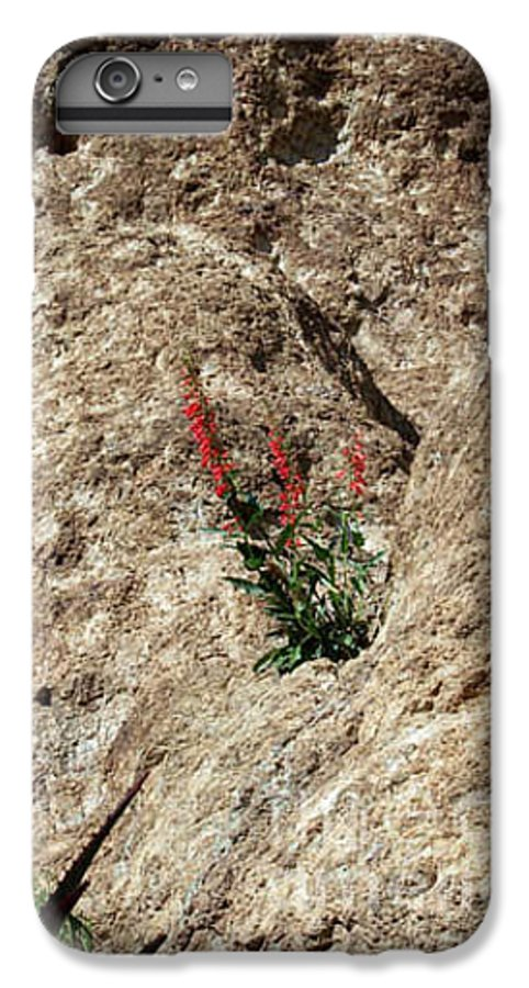 Wildflowers; Flowers IPhone 6 Plus Case featuring the photograph Tenacity by Kathy McClure