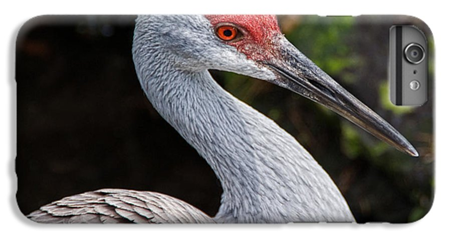 Bird IPhone 6 Plus Case featuring the photograph The Greater Sandhill Crane by Christopher Holmes