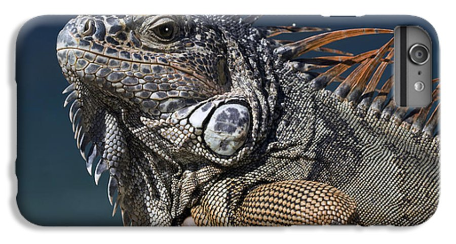 Animal IPhone 6 Plus Case featuring the photograph The Night Of The Iguana by Carl Purcell