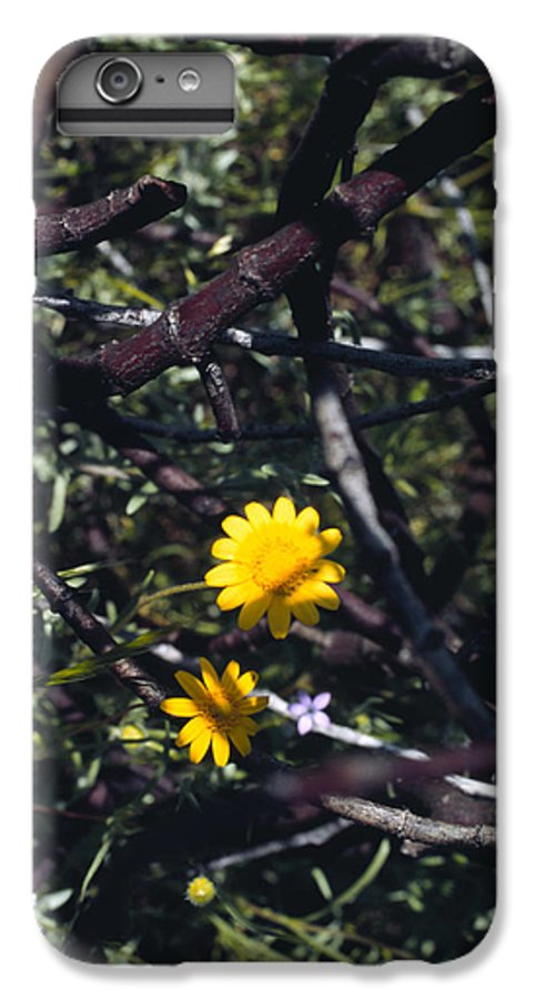 Flower IPhone 6 Plus Case featuring the photograph The Prisoner by Randy Oberg