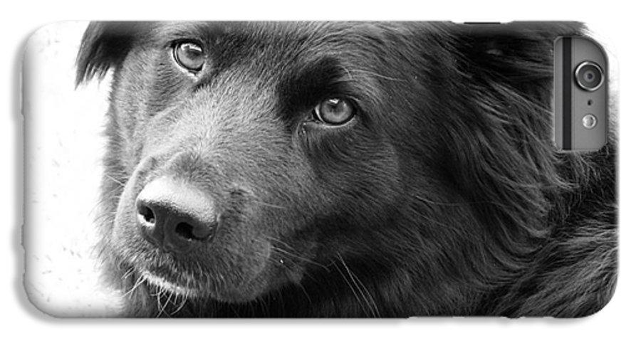 Dog IPhone 6 Plus Case featuring the photograph Thinking by Amanda Barcon