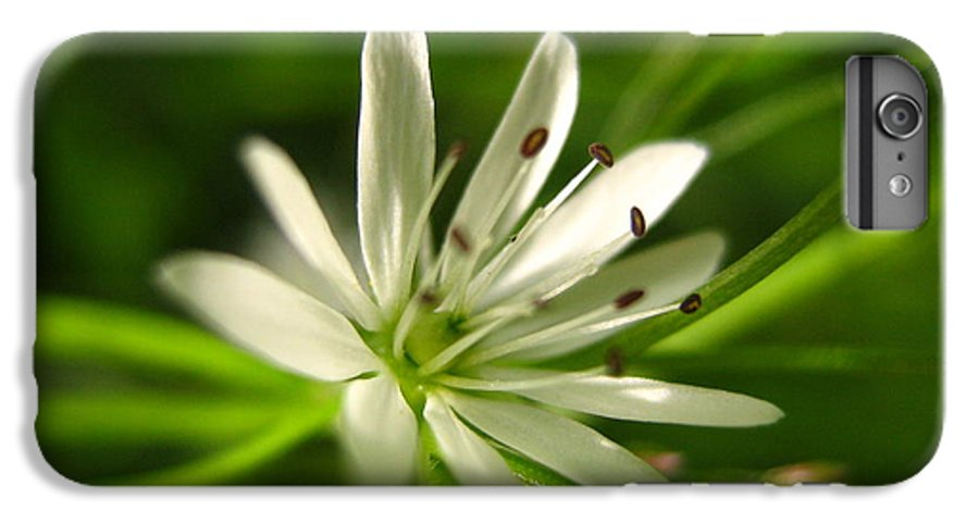 Tiny White Flower IPhone 6 Plus Case featuring the photograph Tiny White Flower by Melissa Parks
