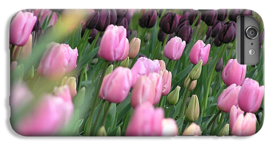 Tulips IPhone 6 Plus Case featuring the photograph Tulip Dreams by Louise Magno