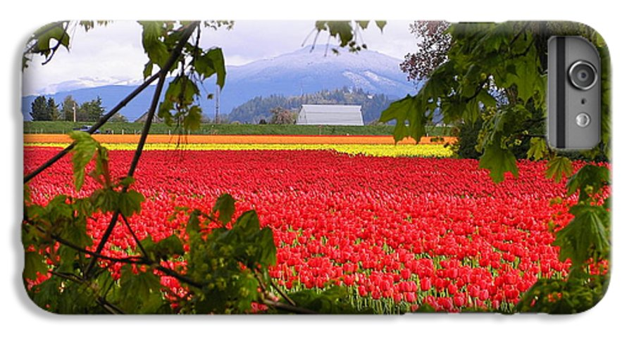 Tulip IPhone 6 Plus Case featuring the photograph Tulips Secret Window by Louise Magno