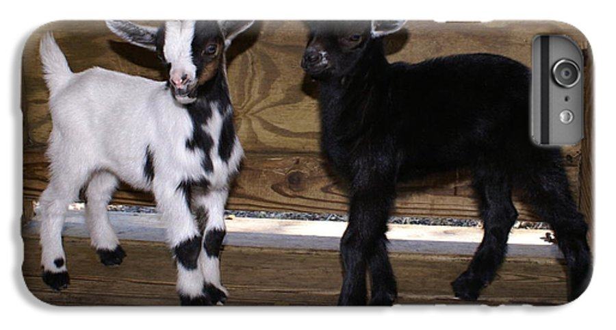 Baby Goat Twins IPhone 6 Plus Case featuring the photograph Twin Kids by Debbie May