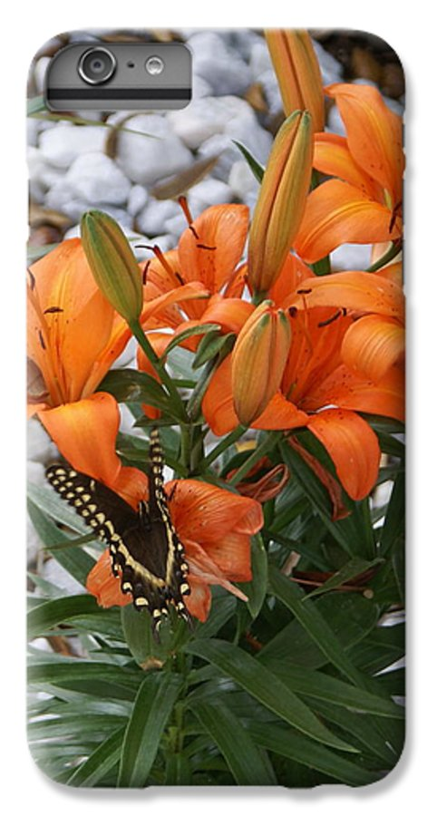 Flower IPhone 6 Plus Case featuring the photograph Untitled by Debbie May