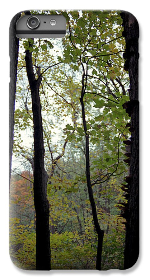 Tree IPhone 6 Plus Case featuring the photograph Vertical Limits by Randy Oberg