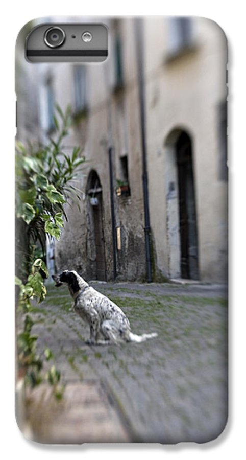 Dog IPhone 6 Plus Case featuring the photograph Waiting by Marilyn Hunt