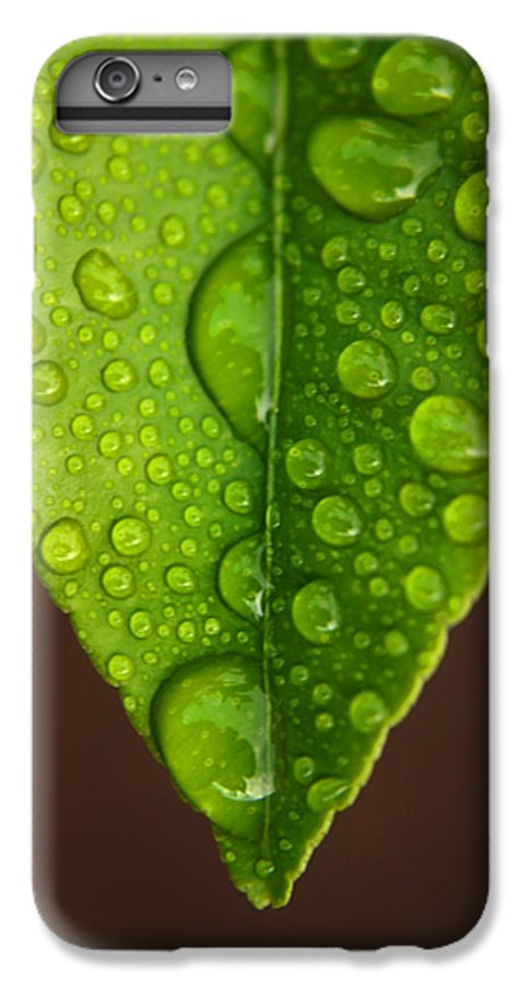 Leaf IPhone 6 Plus Case featuring the photograph Water Droplets On Lemon Leaf by Ralph A Ledergerber-Photography