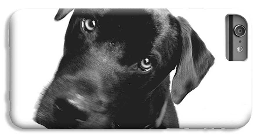 Labrador IPhone 6 Plus Case featuring the photograph What by Amanda Barcon