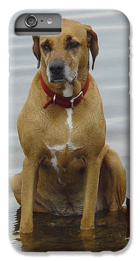 Dog IPhone 6 Plus Case featuring the photograph Where's The Pillow by Debbie May