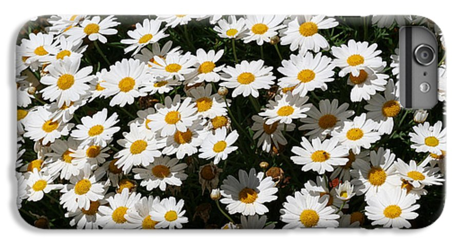 White IPhone 6 Plus Case featuring the photograph White Summer Daisies by Christine Till