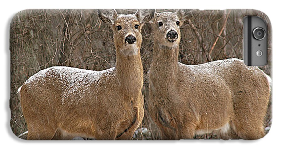 Deer IPhone 6 Plus Case featuring the photograph White-tailed Deer Pair Peering Out From Snowstorm by Max Allen