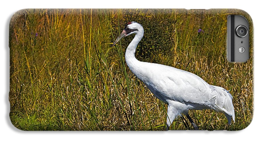 whooping Crane IPhone 6 Plus Case featuring the photograph Whooping Crane by Al Mueller
