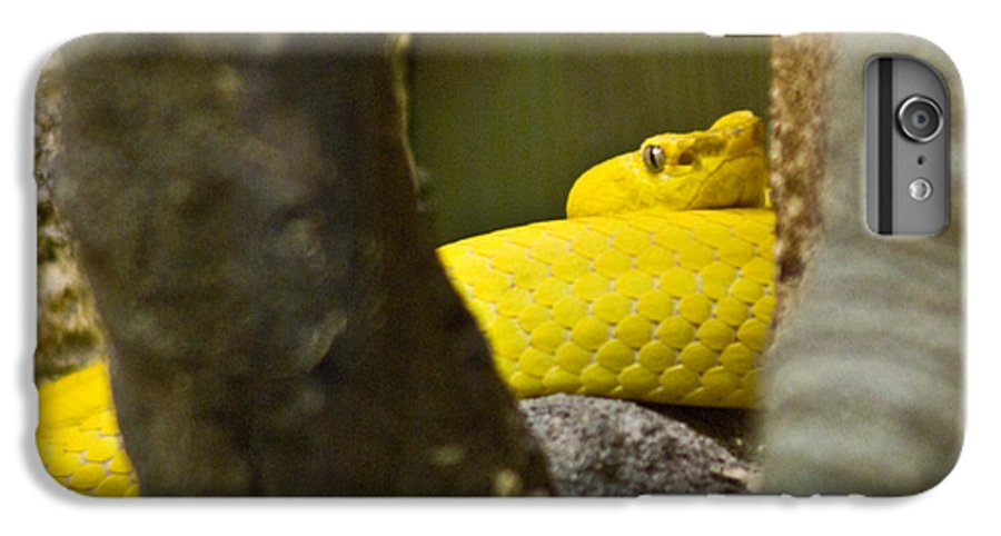 Yellow IPhone 6 Plus Case featuring the photograph Wicked Snake by Douglas Barnett
