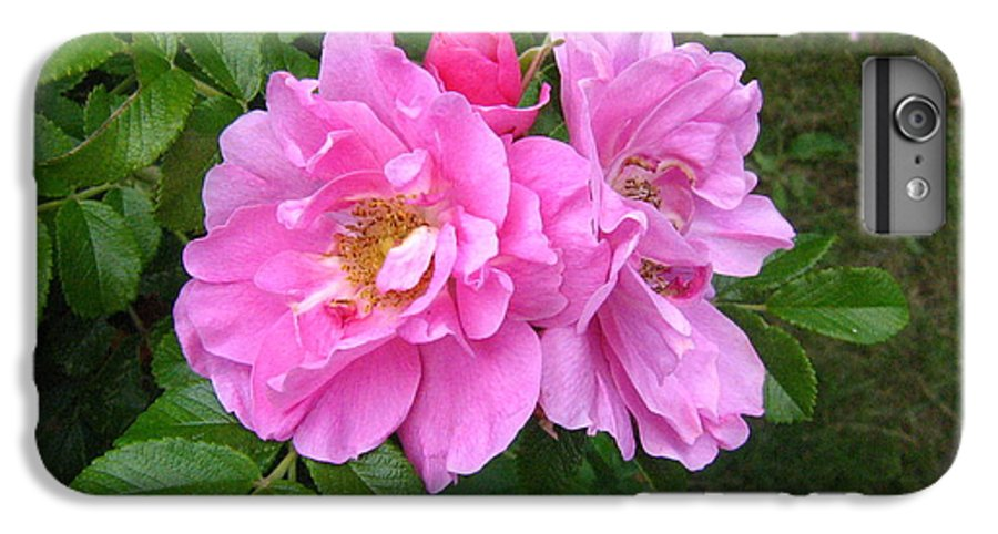 Rose IPhone 6 Plus Case featuring the photograph Wild Roses by Melissa Parks