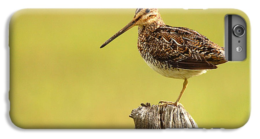 Snipe IPhone 6 Plus Case featuring the photograph Wilson's Snipe On Morning Perch by Max Allen