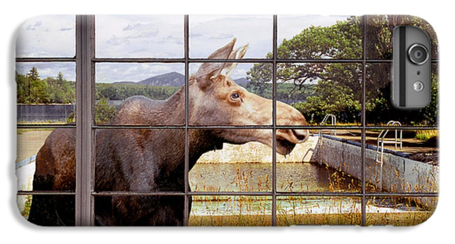 Moose IPhone 6 Plus Case featuring the photograph Window - Moosehead Lake by Peter J Sucy