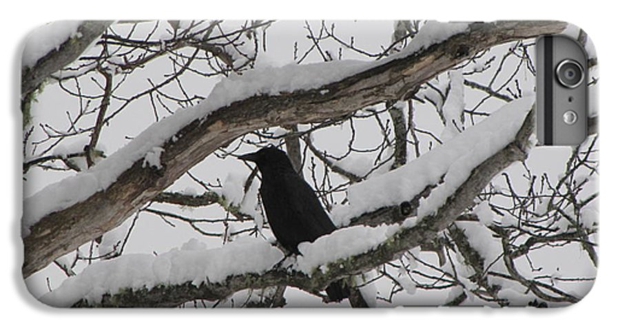 Crow IPhone 6 Plus Case featuring the photograph Winter Crow by Melissa Parks