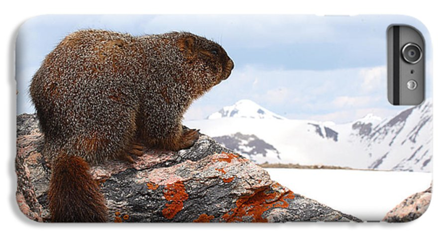 Marmot IPhone 6 Plus Case featuring the photograph Yellow-bellied Marmot Enjoying The Mountain View by Max Allen
