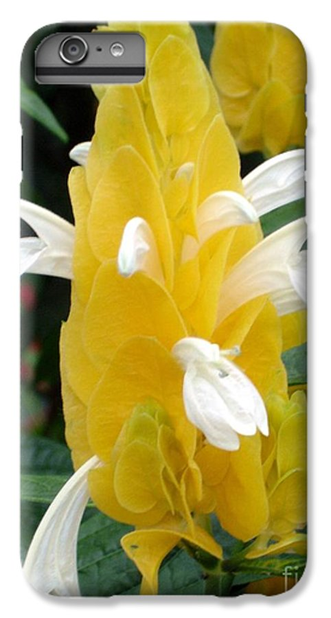 Flower IPhone 6 Plus Case featuring the photograph Yellow Eruption by Shelley Jones