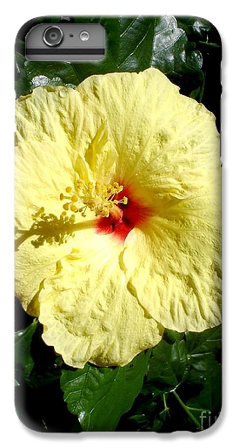 Flower IPhone 6 Plus Case featuring the photograph Yellow Hibiscus The Hawaiian State Flower by Chandelle Hazen