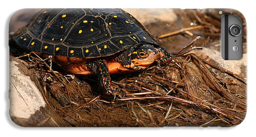 Turlte IPhone 6 Plus Case featuring the photograph Yellow-spotted Turtle Crawling Through Wetland by Max Allen