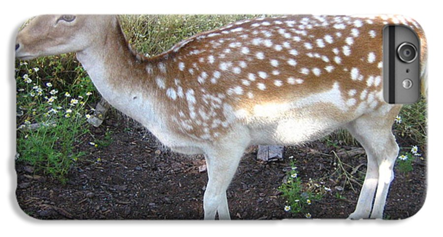 Deer IPhone 6 Plus Case featuring the photograph Young Doe by Melissa Parks