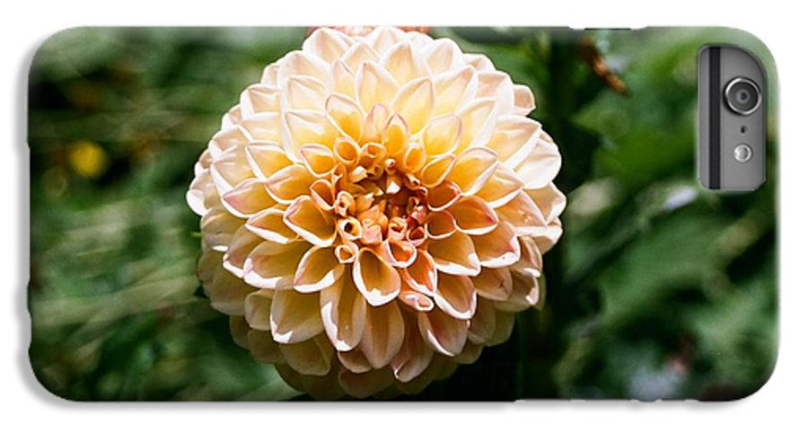 Zinnia IPhone 6 Plus Case featuring the photograph Zinnia by Dean Triolo