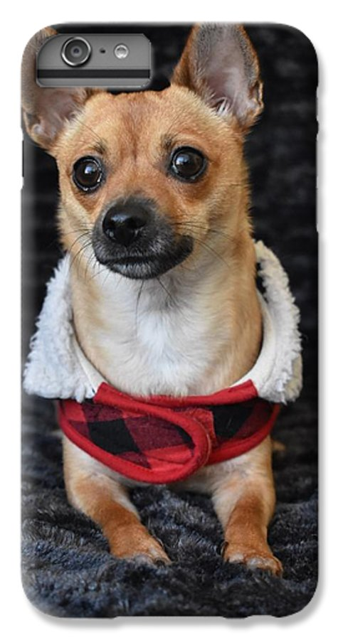 Chihuahua IPhone 6 Plus Case featuring the digital art Miracle by Cassidy Marshall