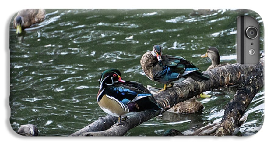 Duck IPhone 6 Plus Case featuring the photograph Resting Ducks by Rob Olivo