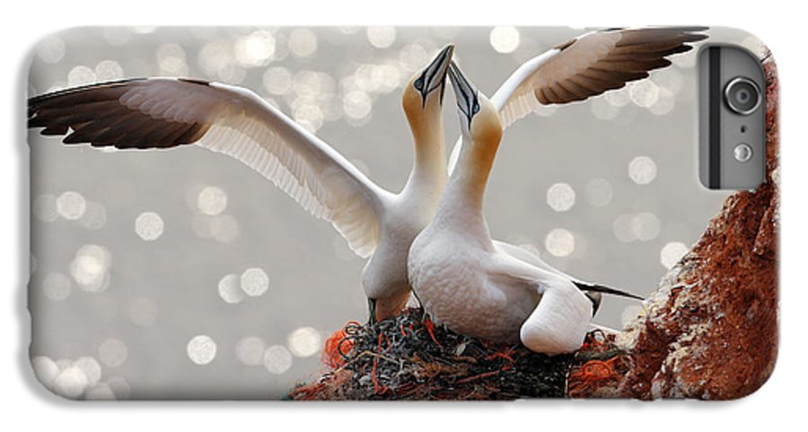 Beak IPhone 6 Plus Case featuring the photograph Two Gannets. Bird Landing On The Nest by Ondrej Prosicky