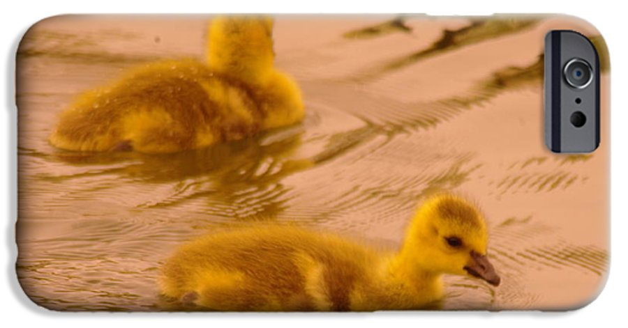 Gosling IPhone 6s Case featuring the photograph Goslings by Jeff Swan