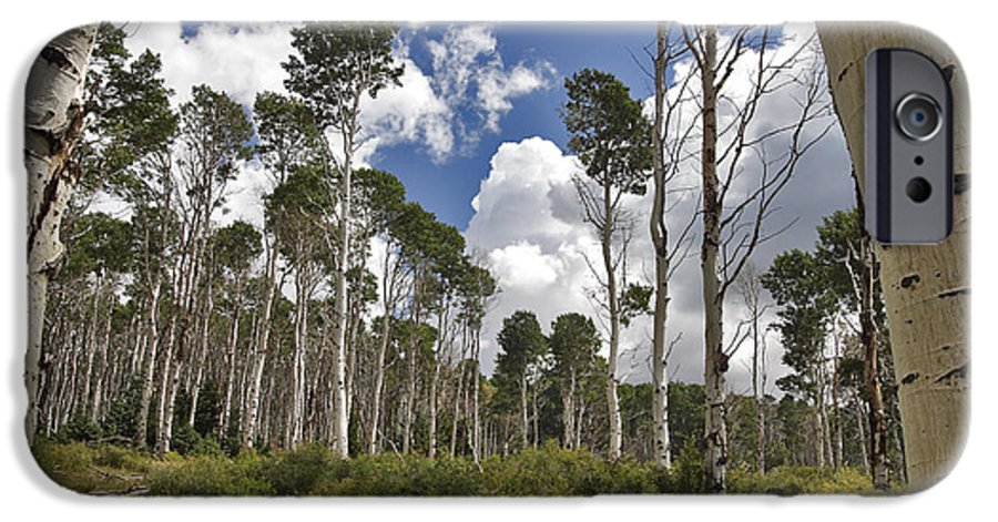 3scape Photos IPhone 6s Case featuring the photograph Aspen Grove by Adam Romanowicz