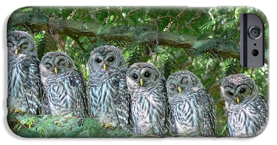 Owl IPhone 6s Case featuring the photograph Barred Owlets Nursery by Jennie Marie Schell