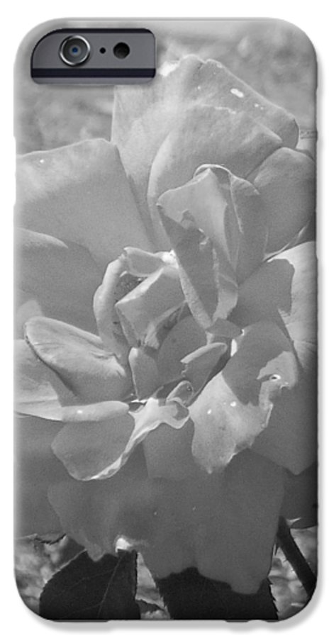 Rose IPhone 6s Case featuring the photograph Dew Rose by Pharris Art
