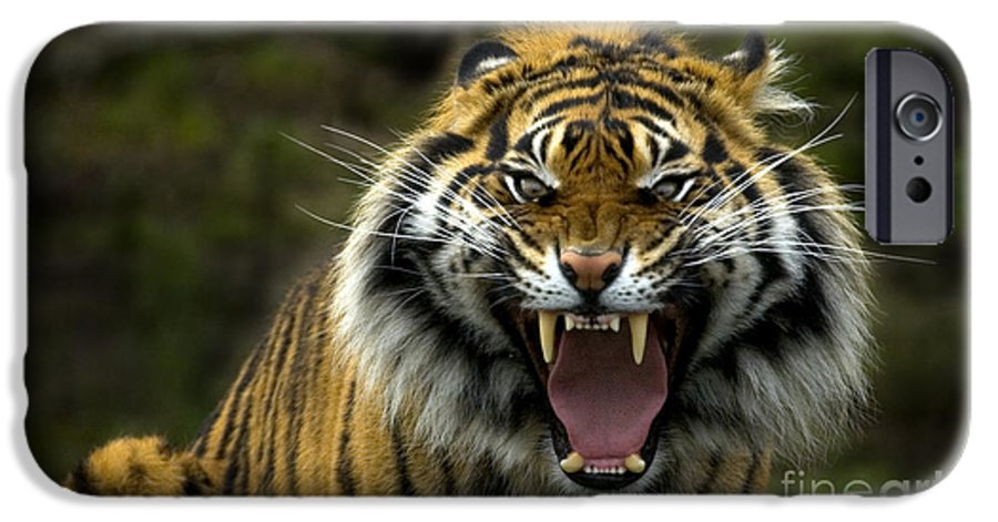 Tiger IPhone 6s Case featuring the photograph Eyes Of The Tiger by Mike Dawson