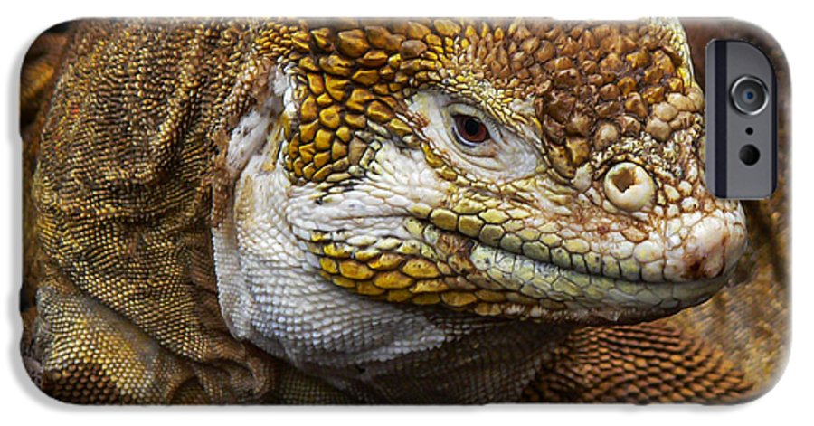 Galapagos IPhone 6s Case featuring the photograph Galapagos Land Iguana by Allen Sheffield