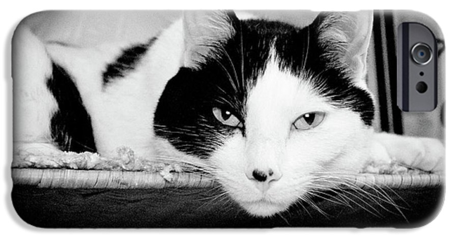 Andee Design Cat IPhone 6s Case featuring the photograph Le Cat by Andee Design