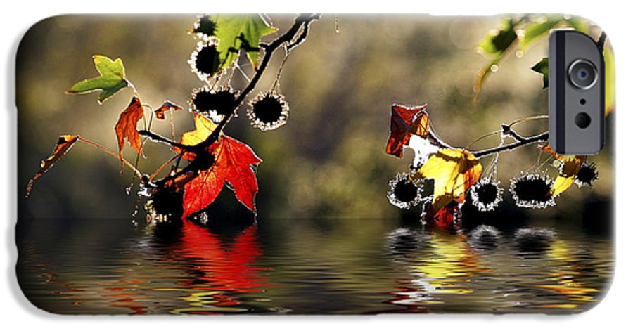 Liquidambar Maple Autumn Fall Flood Water Reflection IPhone 6s Case featuring the photograph Liquidambar In Flood by Sheila Smart Fine Art Photography
