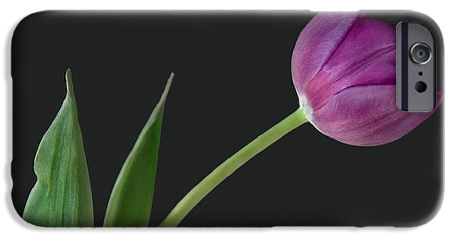 Flower IPhone 6s Case featuring the photograph Looking Ahead by Dan Holm