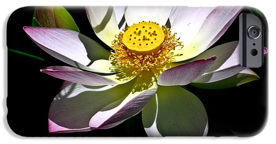 Lotus IPhone 6s Case featuring the photograph Lotus Of The Night by Douglas Barnett